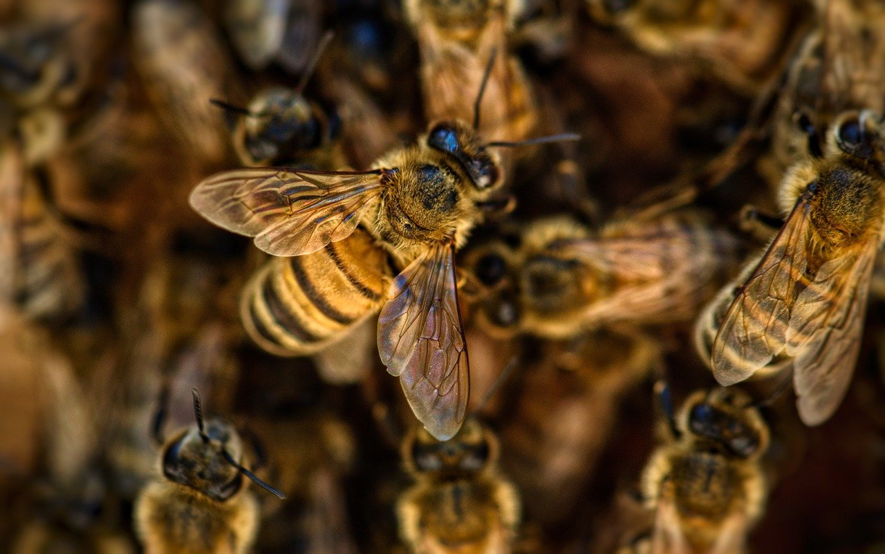 bees, wings, insects